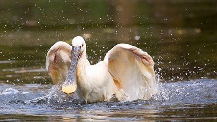 Guida - Introduzione alla fotografia naturalistica