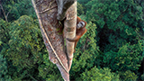 2016 Wildlife Photographer of the Year: la foto che vince è di un'action camera