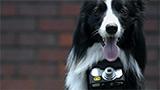 Foto da cani (emozionati) per Nikon