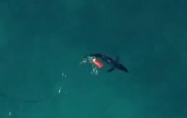 squalo drone